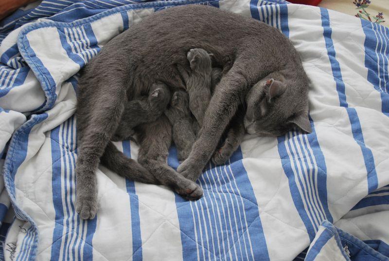 Sophie en kleintjes